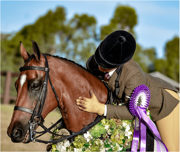 VICTORIOUS 'GLADIATOR' SWITCHES TO DRESSAGE
