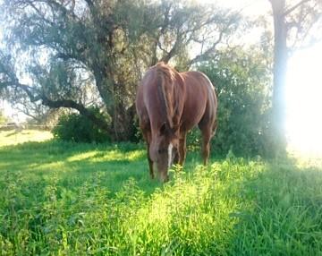 Why horses love nettles