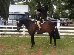 Jo Lawrence's Beckworth Rising Citizen, Champion Show Hunter at Guyra Show 2016 ridden by her son Cameron who was Reserve Champion Junior Boy Rider. Jo has been feeding all her show ponies and horses on the VF Natural Diet for many moons. This pony is 17 years old and looks wonderful.