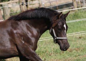 VF Natural Diet Horses Victoria Ferguson