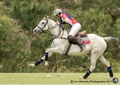 Maddie Shoesmith's Polo Pony Team (SA)