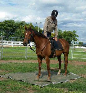 Equine Homeostasis Victoria Ferguson