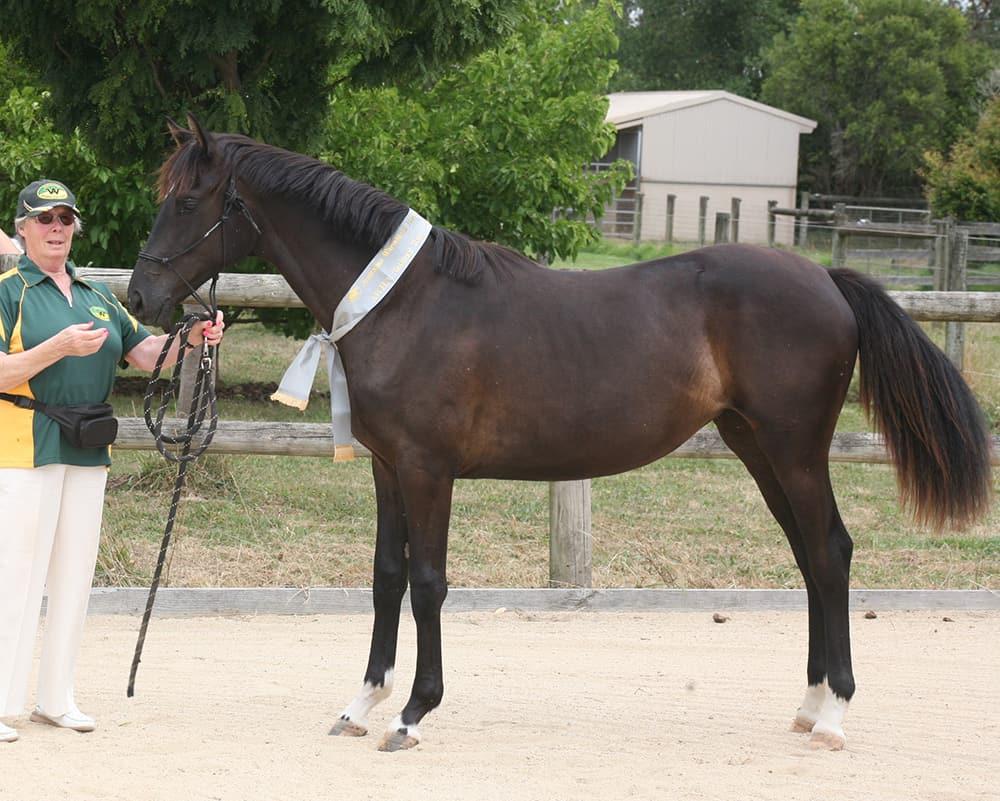 Arthritis Prevention in Horses Victoria Ferguson