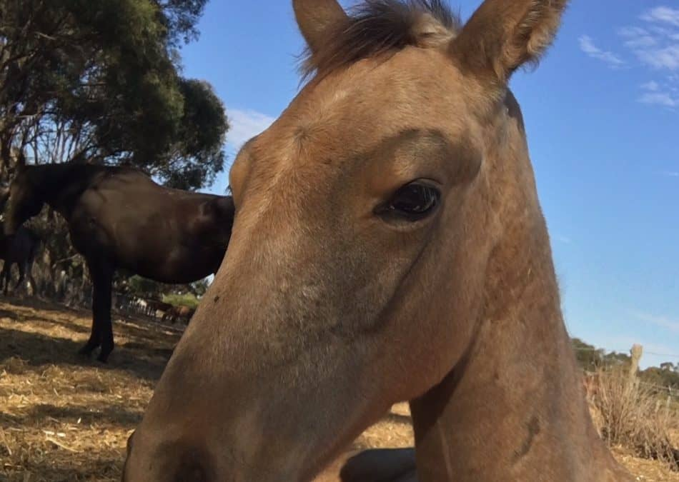 Joint Ill Foal Recovery