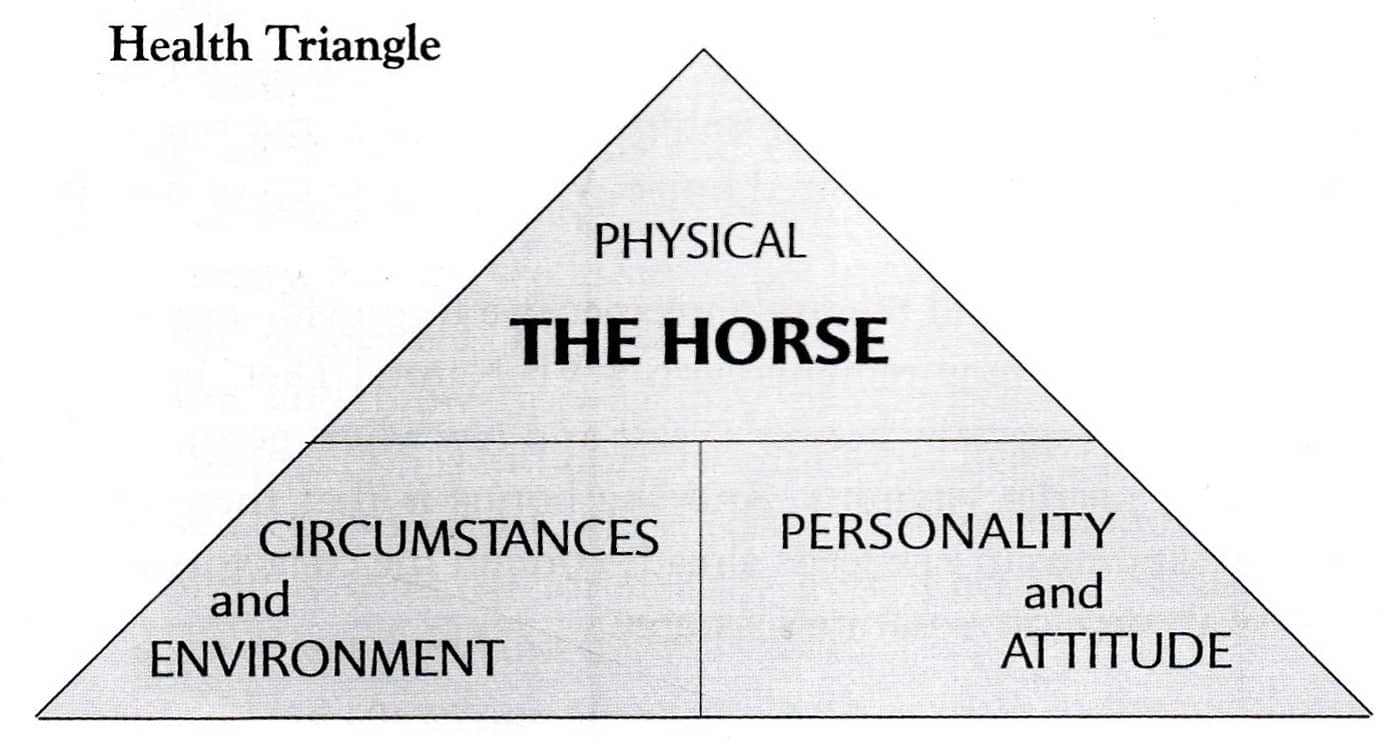 Are Your Horses Well Enough? Victoria Ferguson