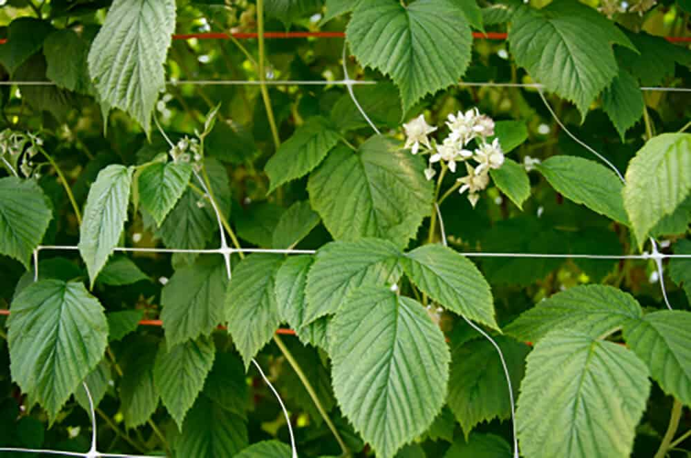 Herbs for Hormonal Mares Victoria Ferguson