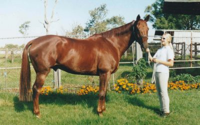 Herbal Rehab for Off Track Thoroughbreds