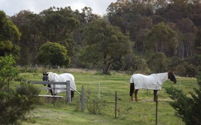 Horse Care in Hot Weather