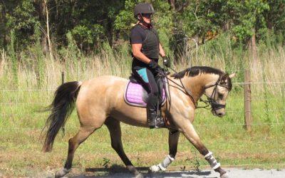 Preventive Equine Nutrition Naturally
