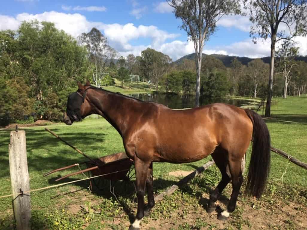 Equine Inflammatory Airway Disease - Herbal Solution Victoria Ferguson
