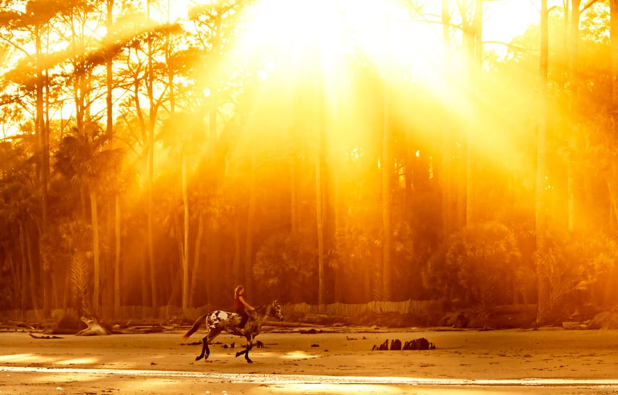 Is your horse's immune system ready for winter?
