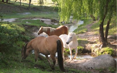 The Benefits of Equine Herbal Medicine