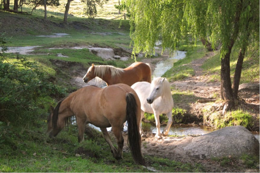 The Benefits of Equine Herbal Medicine