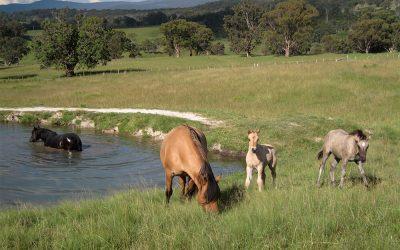 Your Horses' Waterworks