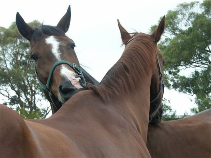 Victoria's Equine Herbal Secrets