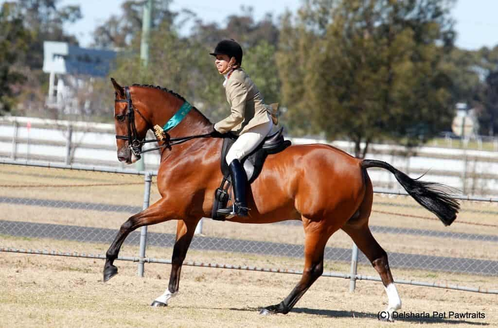 Myth Busting – Showing Horses Drug Free