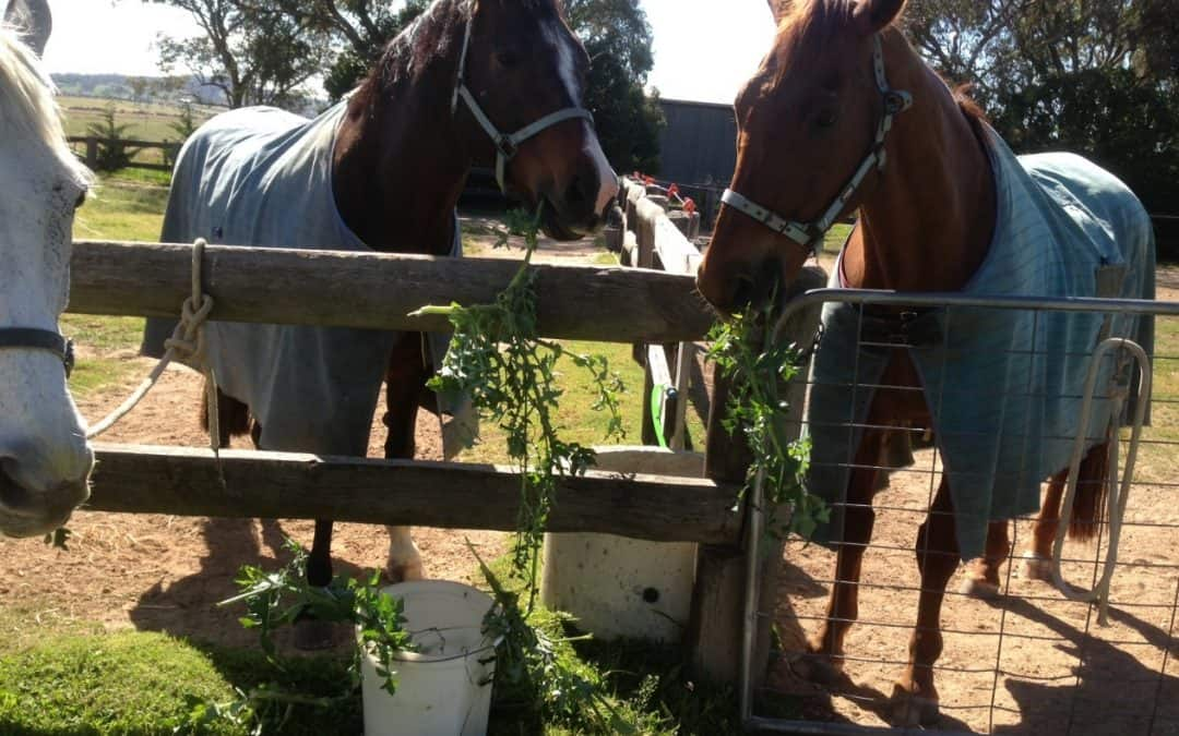 Good and Bad Weeds For Horses