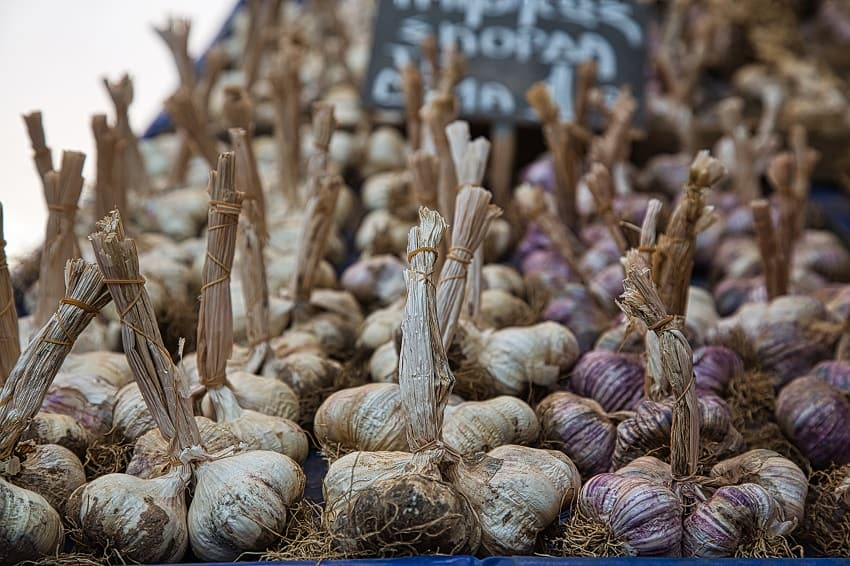 The Facts About Garlic For Horses