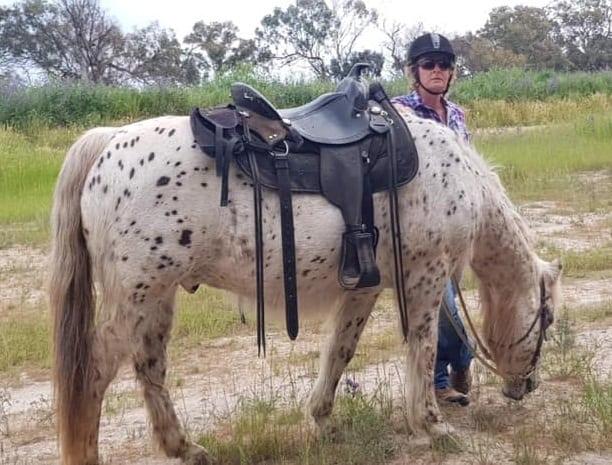 Herbal Help For Cushings Horses & Ponies