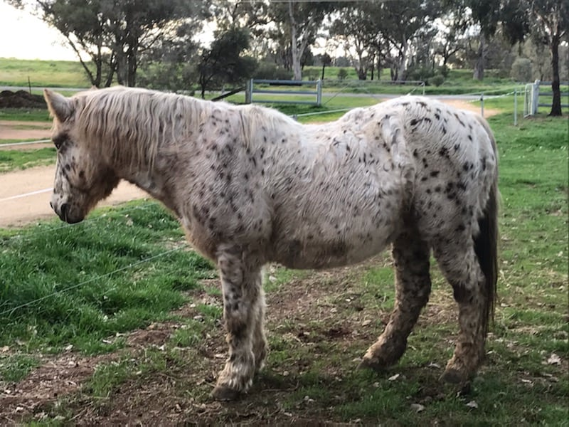 Herbal Help For Cushings Horses & Ponies Victoria Ferguson